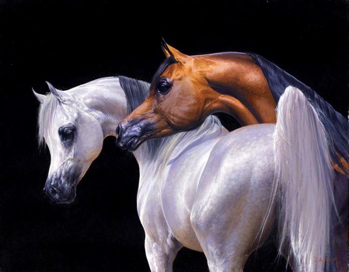 Фото пони жеребцов