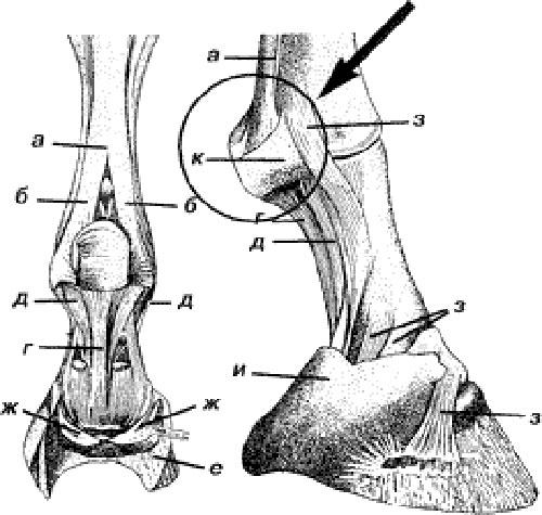 Протрузия шейного позвонка симптомы и лечение