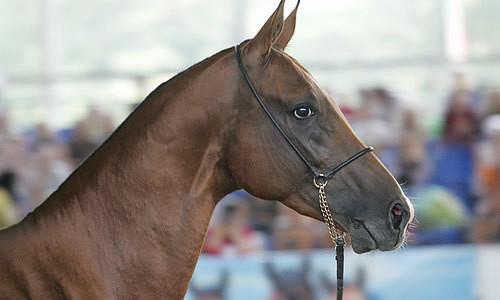 Шея и голова лошади