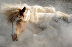Клички и имена для лошадей жеребцов