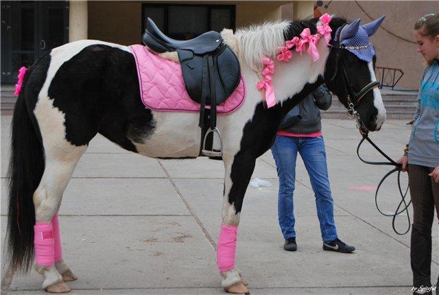 Как самим сделать амуницию для лошадей