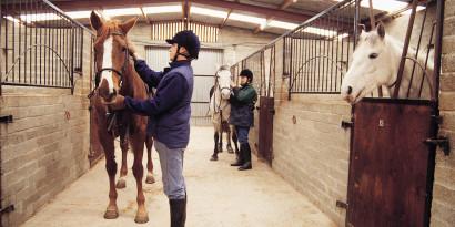Создание комфортной конюшни для лошадей