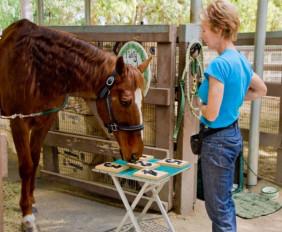 Интелектуальные способности самых умных лошадей