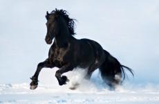 Элегантная и красивейшая лошадь конного мира