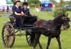 Основные элементы, чтобы сделать повозку для лошади