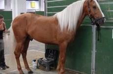 Породы лошадей каштановой масти