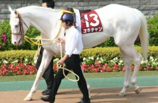 Белая масть лошади