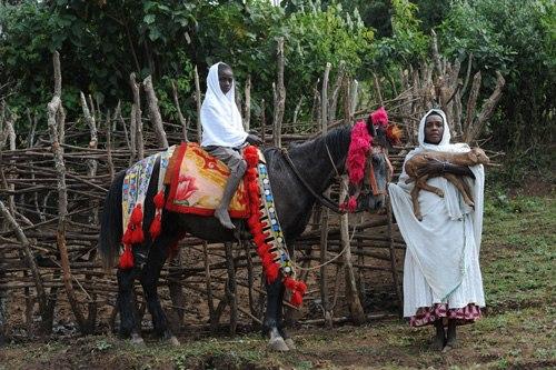 Абиссинская лошадь на выгуле, фото
