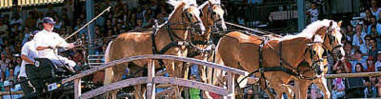 Авелинская лошадь