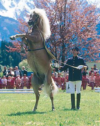Авелинская лошадь, фото