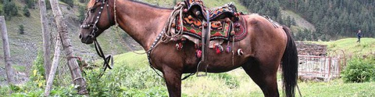 Албанская (мизекайская) порода лошадей