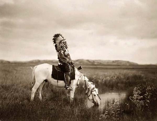 Американская индейская лошадь на водопое, фото