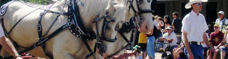 Американская кремовая порода лошадей