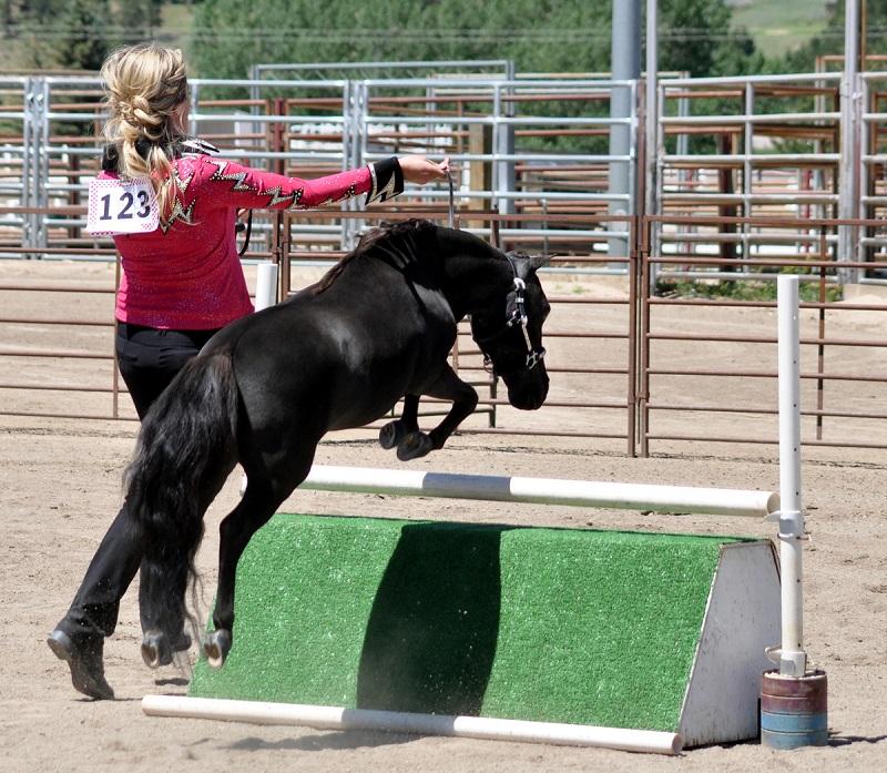 Американская миниарюрная лошадь преодолевает препятствия, фото