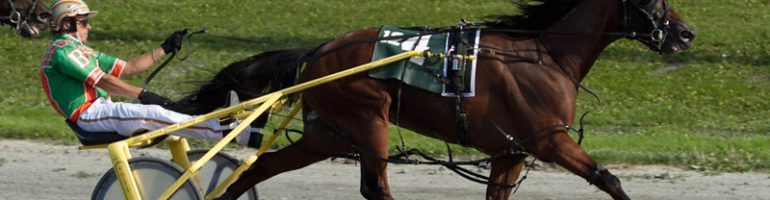 Американская рысистая (стандартбредная) порода лошадей