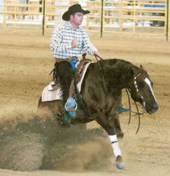Американский квартер (четырехмильная лошадь) – верховая с наездником, фото