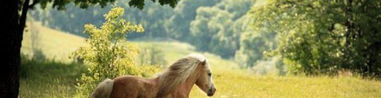 А Пони – тоже Кони