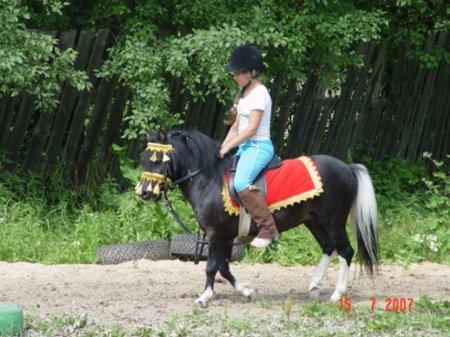 Турецкий пони, фото