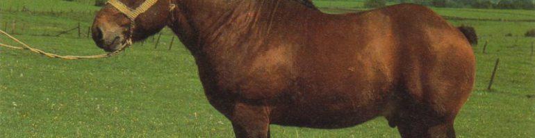 Арденнская тяжеловозная лошадь