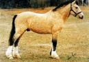 Новые породы лошадей