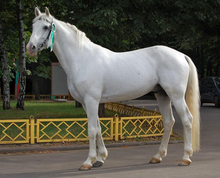История орловской породы лошадей