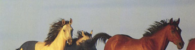 Брамби — дикие лошади Австралии