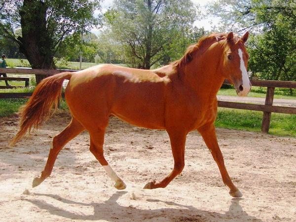 Буденновская лошадь, фото