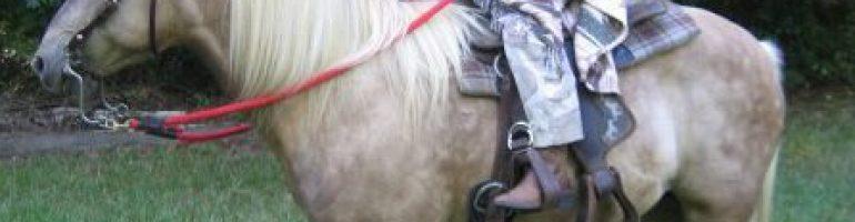 Виргинская горная лошадь