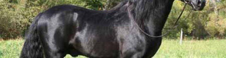 Иберийская лошадь