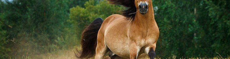 Вюртембергская лошадь