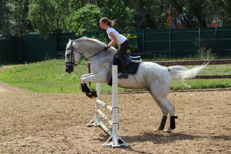 Вюртембергская лошадь на Германской Родине, фото