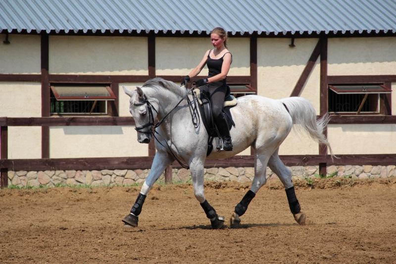 Вюртембергская лошадь с наездником, фото
