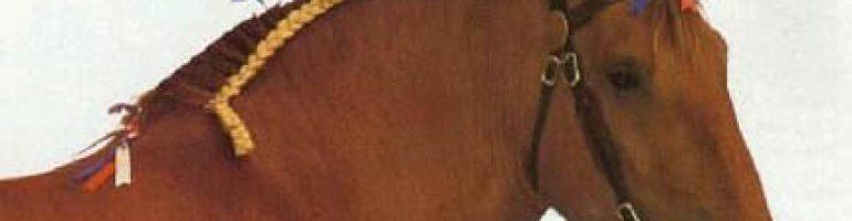 Суффолкская порода лошадей