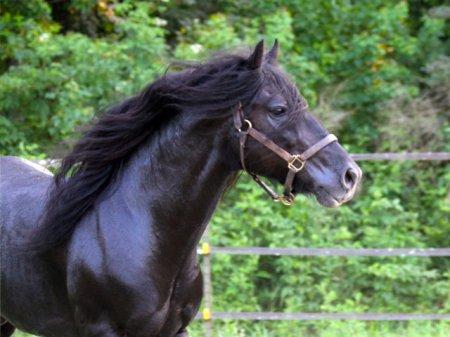 Алтайская порода лошади, фото