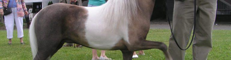 Уникальность мини-лошадей