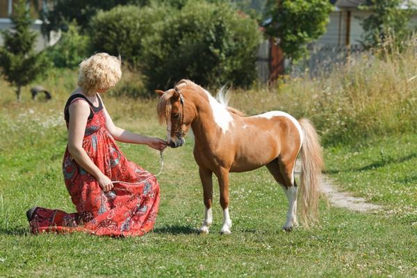 Женщина и Американская миниатюрная порода лошадей, фото