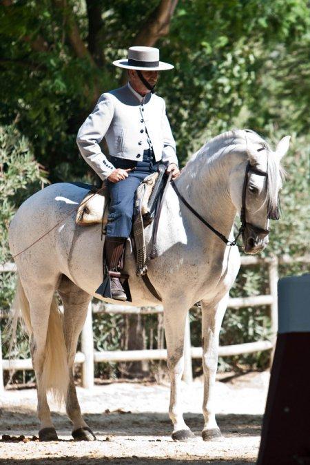 Испанские лошади, фото