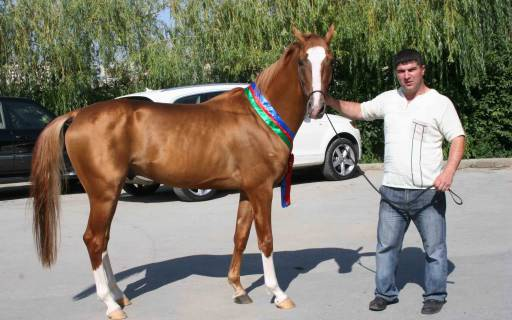 Карабахская лошадь с хозяином, фото