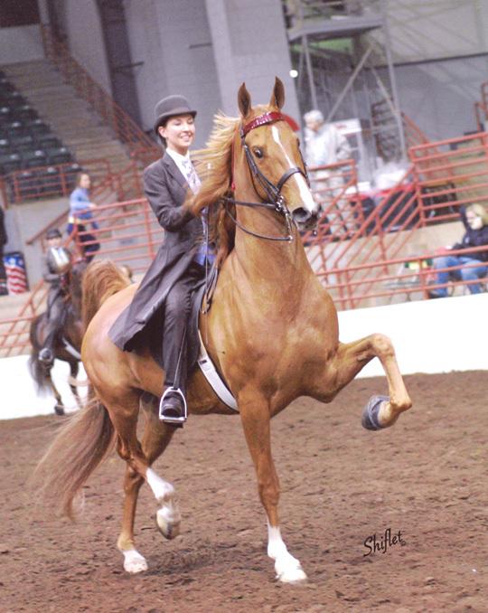Кентуккийская горная верховая лошадь на арене, фото