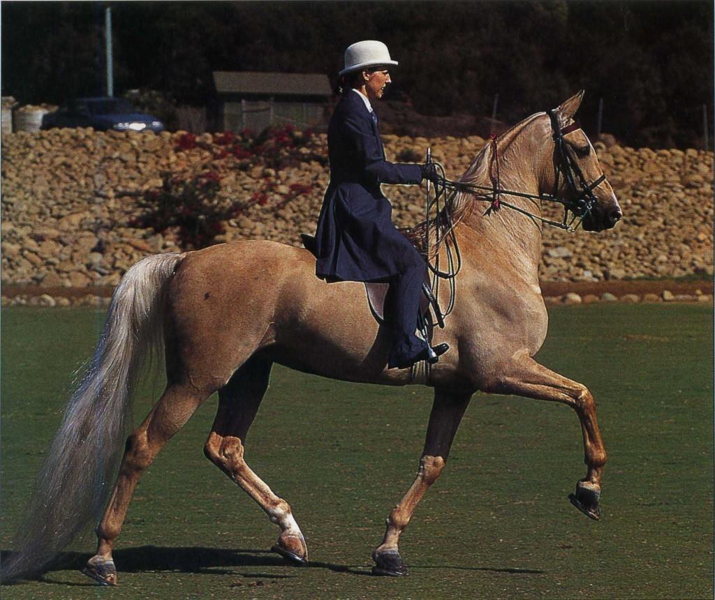 Кентуккийская горная верховая лошадь с наездницей, фото