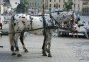 Кнабструбская лошадь