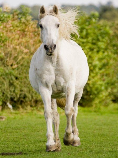 Пони, фото