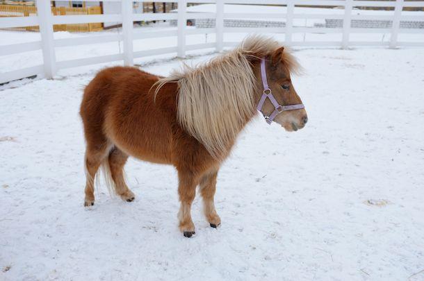 Красивая мини-лошадка, фото
