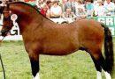 Фелльский пони