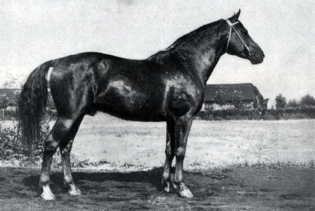 Кустанайская порода коней