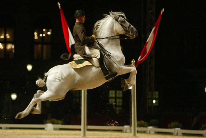 Липицианская лошадь в полете, фото