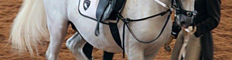 Липицианская лошадь