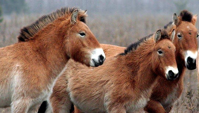 Лошади красивое