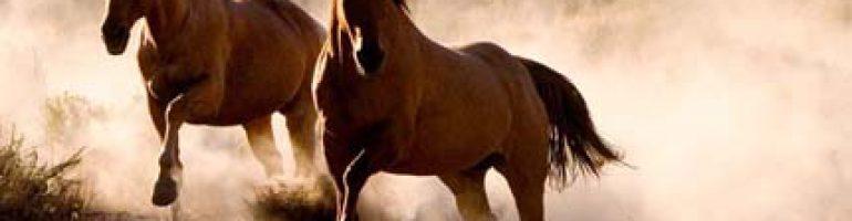 Фредериксборгская порода лошадей
