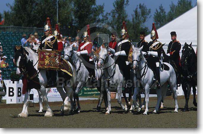 Лошади породы Американский Драмхорс, фото